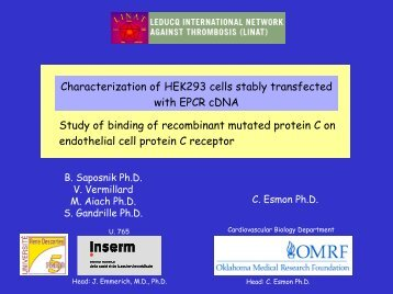 Characterization of HEK293 Cells Stably Transfected with EPCR ...