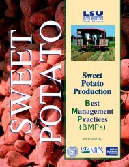 Sweet Potato Production Sweet Potato Production - National Ag ...