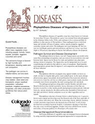 Phytophthora Diseases of Vegetables