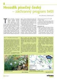 Hvozdík písečný český - Časopis Ochrana přírody