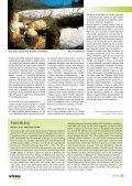 Záchranný program sysla obecného v ČR - Časopis Ochrana přírody - Page 7