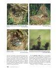 Ochrana přírody č. 4/2002 - Page 7