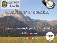 Presentazione sintetica del corso SFN. Anno accademico 2010-2011.