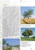 zde ke stažení (pdf, 2282 kB) - Calla - Page 3