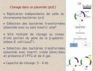 Clonage dans un plasmide (pUC) • Site multiple ... - Université Lille 1