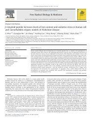 β-Amyloid peptide increases levels of iron content and oxidative ...