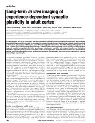 Long-term in vivo imaging of experience-dependent synaptic ...