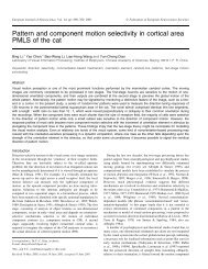 Pattern and component motion selectivity in cortical area PMLS of ...