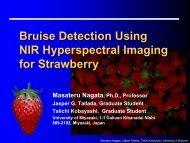 Bruises in Strawberries - Spectral Cameras