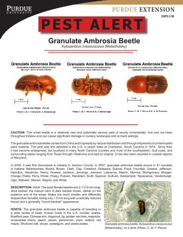 Granulate Ambrosia Beetle - Purdue Extension Entomology ...