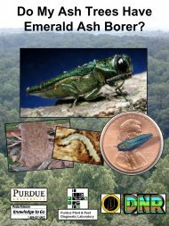 Diagnostic Characters of Emerald Ash Borer on Ash Trees - Purdue ...
