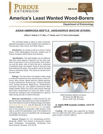 America's Least Wanted Wood-Borers - Purdue Extension ...
