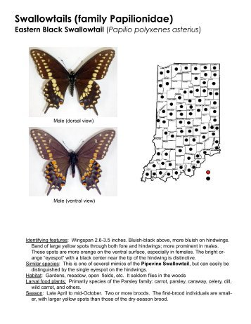 Swallowtails (family Papilionidae) - Purdue Extension Entomology