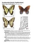 Swallowtails (family Papilionidae) - Purdue Extension Entomology - Page 2