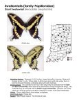 Swallowtails (family Papilionidae) - Purdue Extension Entomology - Page 3