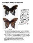 Swallowtails (family Papilionidae) - Purdue Extension Entomology - Page 4