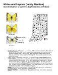 Swallowtails (family Papilionidae) - Purdue Extension Entomology - Page 7