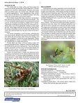 Solitary Bees and Wasps - Purdue Extension Entomology - Purdue ... - Page 2