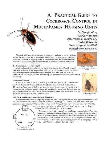 Community-wide cockroach IPM in public housing - Purdue ...