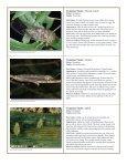 to download pdf - Purdue Extension Entomology - Purdue University - Page 4