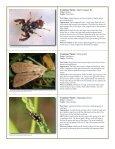 to download pdf - Purdue Extension Entomology - Purdue University - Page 5