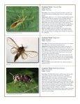 to download pdf - Purdue Extension Entomology - Purdue University - Page 6