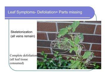 Leaf Symptoms- Defoliation= Parts missing - Purdue Extension ...