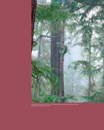 Red cedar - David Suzuki Foundation