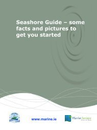A Rocky Seashore and Factors affecting it