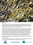 A Rocky Seashore and Factors affecting it - Page 5