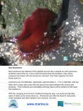 A Rocky Seashore and Factors affecting it - Page 6