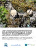 A Rocky Seashore and Factors affecting it - Page 7