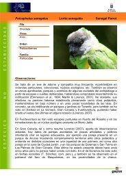 Poicephalus senegalus Lorito senegalés ... - Interreg Bionatura