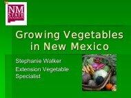 Growing Vegetables in NM