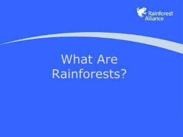 What Are Rainforests? - Home - Rainforest Alliance