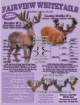 Friday - Whitetail Deer Farmer - Page 3