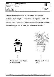 Blumentopf zu klein - aktionbildung
