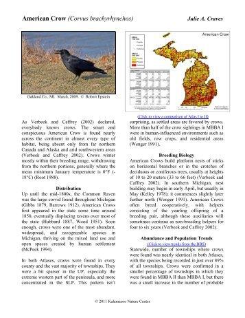 American Crow - Michigan Breeding Bird Atlas Website