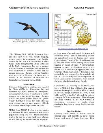 Chimney Swift - Michigan Breeding Bird Atlas Website