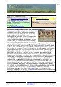 Safariprogram med Lake Eyasi och Serengeti - Dahl Safaris - Page 7
