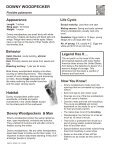 DOWNY WOODPECKER - The State of Water - Page 2