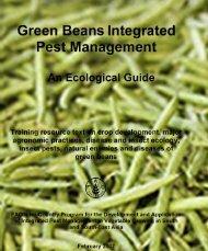 Green Bean Integrated Pest Management - Vegetableipmasia.org