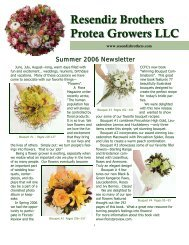Summer 2006 - Resendiz Brothers Protea Growers