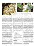 Massas viscosas de rochas se misturam e podem sair como lava em ... - Page 3