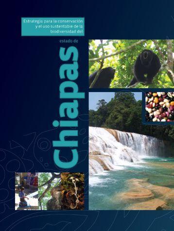 Estrategia Chiapas
