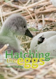 Hatching the eggs v.2.indd - Bert Hellinger Instituut Nederland