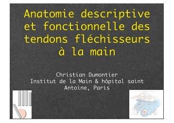 Anatomie tendons fléchisseurs Ch. Dumontier - ClubOrtho.fr