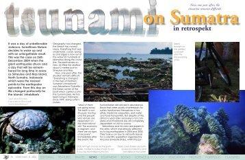 After the Tsunami - X-Ray Magazine