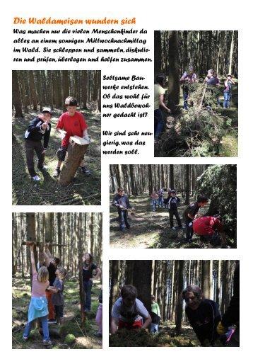 Die Waldameisen wundern sich
