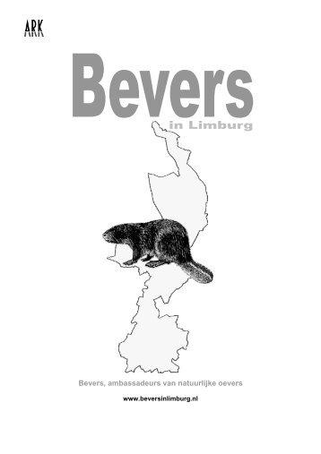 Bevers in Limburg - ARK Natuurontwikkeling